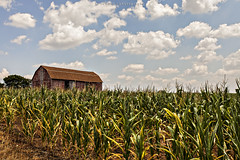 Sunday in the Country (CJ Schmit) Tags: summer usa wisconsin clouds barn canon corn afternoon unitedstates farm country addison hartford oldbarn canonef1740mmf40lusm 5dmarkii canon5dmarkii cjschmit wwwcjschmitcom cjschmitphotography
