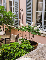 Avignon, France 06.2012 (Andrea Mazzotta) Tags: flowers france garden nikon shutters avignon hydranga d3x lamirande httpwwwlamirandefrenaccueil
