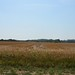 "Illinois Land for Sale - Fulton County Illinois • <a style=""font-size:0.8em;"" href=""http://www.flickr.com/photos/66358149@N06/7698674658/"" target=""_blank"">View on Flickr</a>"