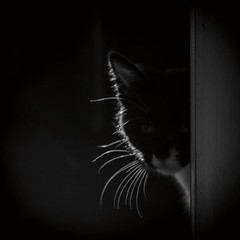 ^^ (c-or^^) Tags: bw cats chat katze gatto neugierig ngstlich pentaxkr imageourtime schwarzweisesmaiktzchen