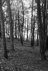 Rivington (P.A.B.) Tags: trees bw forest 35mm ilfordfp4 nikonf5 rivingtonterracedgardens nikonnikkor2470f28afsged