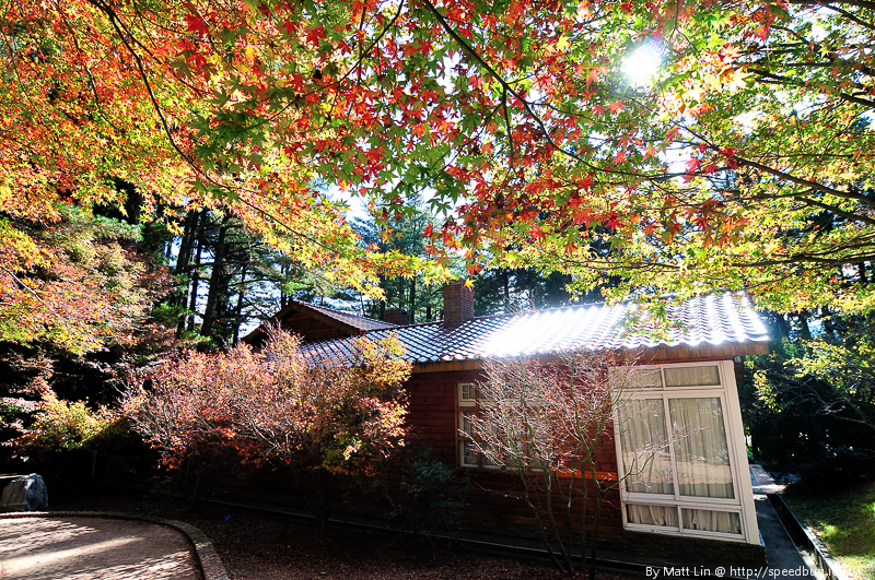 福壽山農場楓紅-35