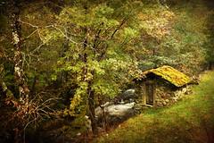 Un molino (Geli-L) Tags: río molino otoño niebla texturas monasteriodelcoto blinkagain ruby10 ruby5 ruby15 creativephotocafe ruby20 riócoto