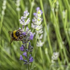 Dedicada a tod@s vosotr@s primer da de primavera. (Sweet Memories58) Tags: naturaleza flores insectos primavera anamara sweetmemories58