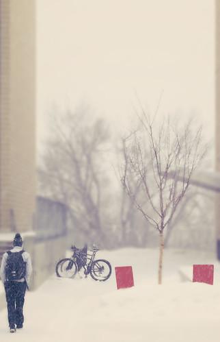 brown_snow