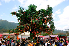 IMG_0010 (janoski006) Tags: china new city travel people urban horse orange tree leaves tangerine asian person asia good year chinese fortune hong kong destiny luck wishes lunar wishing