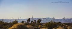 Mojave, CA (Haxtorm) Tags: california usa tree energy desert wind joshua farm joshuatree center mojave alta windturbine altawindenergycenter