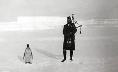 Gilbert Kerr, a member of the Scottish National Antarctic Expedition serenading an Emperor penguin, 1904 [670x407] #HistoryPorn #history #retro http://ift.tt/1SPeJXl (Histolines) Tags: history expedition penguin scottish an retro national timeline gilbert member 1904 emperor kerr antarctic serenading vinatage historyporn histolines 670x407 httpifttt1spejxl