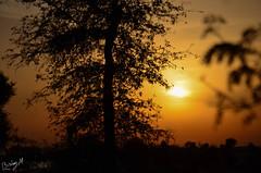#Sunset #Dubai #Tree #SunPhotography #Amazing Nature of God (Bishoy Micheal) Tags: sunset tree amazing dubai sunphotography
