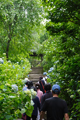 20160528-D7-DS7_3013.jpg (d3_plus) Tags: street sky plant flower building history nature japan temple nikon scenery shrine kamakura daily architectural telephoto bloom  tele streetphoto nikkor   tamron    shintoshrine  buddhisttemple dailyphoto sanctuary 28300mm   thesedays kitakamakura   28300     holyplace historicmonuments tamron28300mm  ancientcity   tamronaf28300mmf3563    a061  architecturalstructure telezoomlens d700  tamronaf28300mmf3563xrdildasphericalif nikond700   a061n