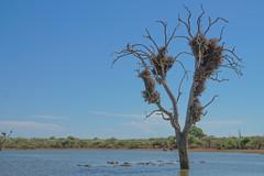 Suedafrika-35 (Lukas P Schmidt) Tags: nationalpark hippo krugerpark