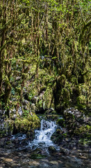 L'eau (Collabois) Tags: nikon cairn chemin mousse pyrnes fes fougres d600 randonnes baronnies dryades gourguedasque