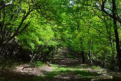 Lake Chuzenji - the path on the lake shore (louisemarston) Tags: lake japan nikko lakechuzenji nikkonationalpark