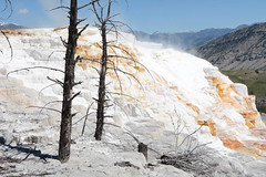 "Mammoth Hot Springs • <a style=""font-size:0.8em;"" href=""http://www.flickr.com/photos/75865141@N03/27042329874/"" target=""_blank"">View on Flickr</a>"