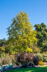 DSC_5094 (Scottmh) Tags: gardens nikon royal australia melbourne victoria botanic d7100