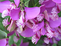Furry Flowers! ('cosmicgirl1960' NEW CANON CAMERA) Tags: flowers white green nature gardens spain purple parks espana costadelsol andalusia marbella yabbadabbadoo worldflowers