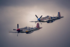 North American P-51 Mustangs (nigdawphotography) Tags: plane airplane fly war fighter aircraft aeroplane mustang pilot p51