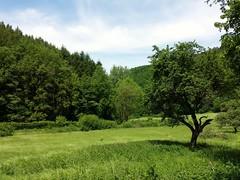 Baybachtal Hunsrck (christiane.grosskopf) Tags: tree green germany deutschland grn baum rheinlandpfalz hunsrck rhinelandpalatinate baybachtal samsunggalaxys4 samsungs4 baybachvalley