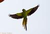 IMG_7101L4 (Sharad Medhavi) Tags: bird canoneod50d birdsandbeesoflakeshorehomes
