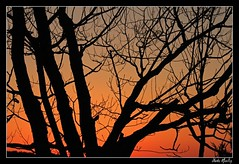Maple Silhouette (Outdoor Traveler) Tags: trees winter light sunset red sky orange sunlight black tree nature colors silhouette yellow wisconsin night forest gold march spring lowlight backyard exposure glow view dusk branches rustic scenic calm limbs sunlit nightfall shutterspeed perfectsunsetsunrisesandskys serentynow