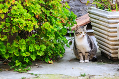 The kitty and the flower pots (Raoul Pop) Tags: travel winter italy cats pets castle animals canon europe italia seasons cities places fortress marche grottammare canoneos5d