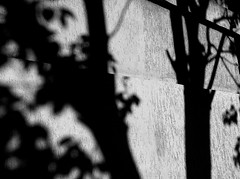 the skull :D (ΞSSΞ®®Ξ) Tags: city light shadow bw italy white abstract black roma tree wall contrast skull mood shadows view angle pov walk branches perspective gimp crop framing nero lazio iphone