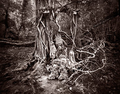 Wonderland 'The Puppetry of Fools' (Kirsty Mitchell) Tags: tree fairytale tim vines woods king andrews puppet spell fantasy wonderland fool enchanted marionette puppetry kirstymitchell elbievaneeden wonderlandpartii kinggammelyn