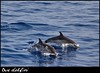 Two dolphins in the open sea (antony5112) Tags: animali animals fishes pesci delfini dolphins me2youphotographylevel1 me2youphotographylevel2 me2youphotographylevel3 me2youphotographylevel4 allofnatureswildlifelevel1 allofnatureswildlifelevel2 allofnatureswildlifelevel3 allofnatureswildlifelevel4 allofnatureswildlifelevel5 allofnatureswildlifelevel6 allofnatureswildlifelevel7