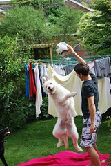 Jump Doggie (JBOT | Adaptive Disability Lifestyle) Tags: pink dog pet garden fun football line blanket washing addz