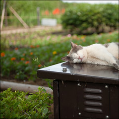 (MT...) Tags: park flower japan cat square bokeh siesta enoshima     kanagawaprefecture  62012
