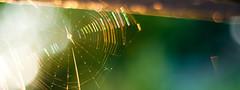 Web (daniellih) Tags: seattle light summer sun sunlight blur color uw nature sunshine june bay spider washington blurry colorful university dof bokeh outdoor web spiderweb 2012 montlake portagebay daniellih