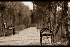 "Mist Of a Memory !!! (Noor Al-janabi ""N.J"") Tags: old trees love chair missing kissing kisses longing"