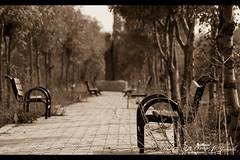 "Mist Of a Memory !!! (Noor Al-janabi ""N.J"") Tags: old trees love chair missing kissing kisses longing عندما الماضي منتزه نشتاق الاشتياق"