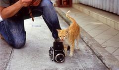Cat with Camera (GMilo) Tags: leica fuji zeissikon summilux fortiasp