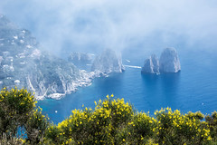 Faraglioni Rocks Off The Isle of Capri (glness) Tags: italy capri rocks mediterranean wildflowers cerulean faraglioni solaro gregness