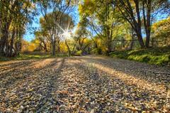 MPW_4759_60_61 (Michael-Wilson) Tags: trees sunset arizona lake fall leaves az wash sunburst prescott watsonlake michaelwilson michaelwilsoncom