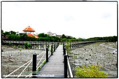Mangrove forest Chonburi tour by naturenote_E12461014-004