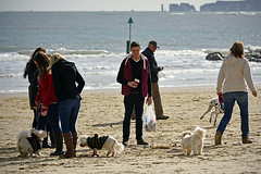 Dogs! Dogs! Dogs! (The Image Den) Tags: people beach dogs seaside nikon chaos candid meeting dorset bournemouth sandbanks poole bedlam oldharry dogwalkers d5200