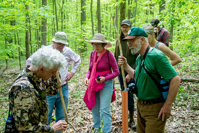 Hoosier National Forest - Young's Creek - Young's Creek - Sierra Club Hike - May 7, 2016