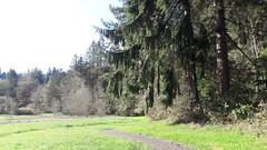 20160331_091650 (ks_bluechip) Tags: creek evans trails preserve sammamish usa2106