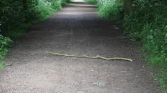 Hard Hat Area (Wildlife Terry) Tags: branch falling hardhatarea wheelockrailtrail wheelocksandbachcheshire cecrangers cheshirewildlifeandnatureamateurphotography