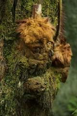 Fuzzy tree (JenGallardo) Tags: nyc newyorkcity plants newyork tree bronx nybg newyorkbotanicalgarden bronxbotanicalgarden
