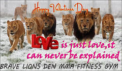 Brave Lions Den MMA Fitness Gym (BRAVE LIONS MMA DEN PVT.LTD) Tags: mma fitness gym gandhinagar gujarat india brave lions den martialarts martial mixmartialartscoin weight loss best udayan acharya shivang joshi boxing kickboxing kungfu sanda sanshou kicking bravelions top gymtimegymtime time treadmill gainz workout getstrong getfit justdoit youcandoit bodybuilding fitspiration cardio ripped geekabs crossfit beachbody exercise weightraining training shredded abs sixpacks muscle strong lift weights weightloss wod aesthetic squad shreadding personaltrainer