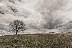 Cracks in the Sky (LauriNovakPhotography) Tags: trees sky tree nature grass illinois skies hoffmanestates poplarcreekforestpreserve