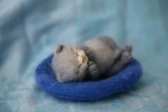 felted kitten (Di-Snake) Tags: felted kitten kat felting handmade feltingkitten fektedkitten