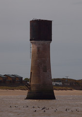 2016_05_0036 (petermit2) Tags: lighthouse yorkshire goose eastyorkshire spurn spurnpoint brentgoose spurnhead eastridingofyorkshire eastriding yorkshirewildlifetrust easington ywt humberestuary lowlighthouse spurnpointlowlighthouse