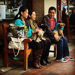 Strut your mutt (IamJomo) Tags: camera dog maryland bethesda iphone jomo montgomerycounty strutyourmutt takenwithaniphone iphoneography iphone6 smallworldphotos jomophoto
