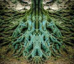 Alien tree roots (Martin Snicer Photography) Tags: trees tree nature photoshop 50mm alien roots fullframe mothernature lightroom 6d phtographer celadna