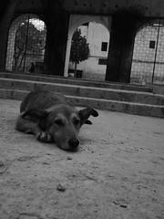 FEZ 06 (liontas-Andreas Droussiotis) Tags: africa bw olympus morocco fez monochome droussiotis liontas
