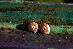 Dobles figuras en espiral (KARNATION) Tags: house verde home metal casa couple oxido lila concha caracoles par caracol morado óxido paraje caracolas molusco cáscara escondidos karnation